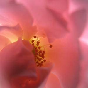 dettaglio-fiore